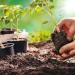 Gardening tips to avoid injuries